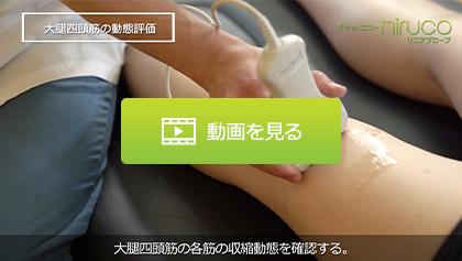 エコーガイド下動態評価②